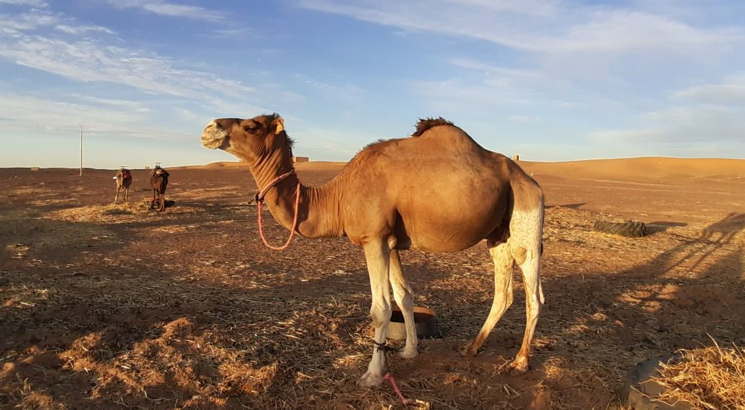 4 Days tour from Marrakech to the desert in Merzouga.