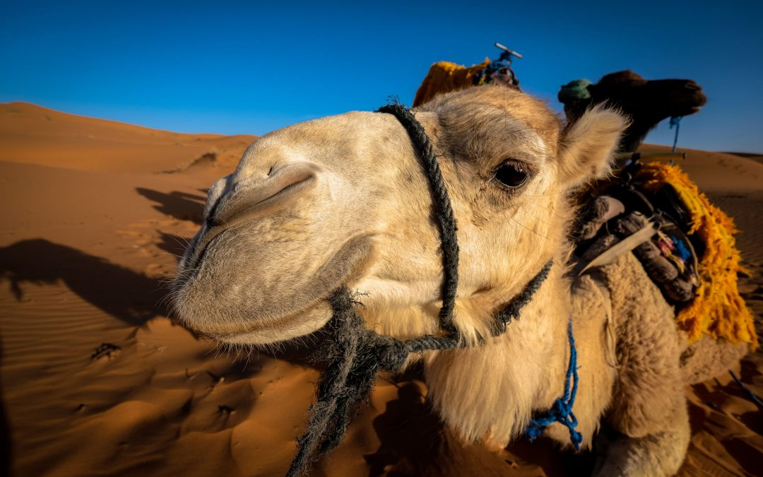 2 days tour from Fes itinerary – Desert tours from Fes.