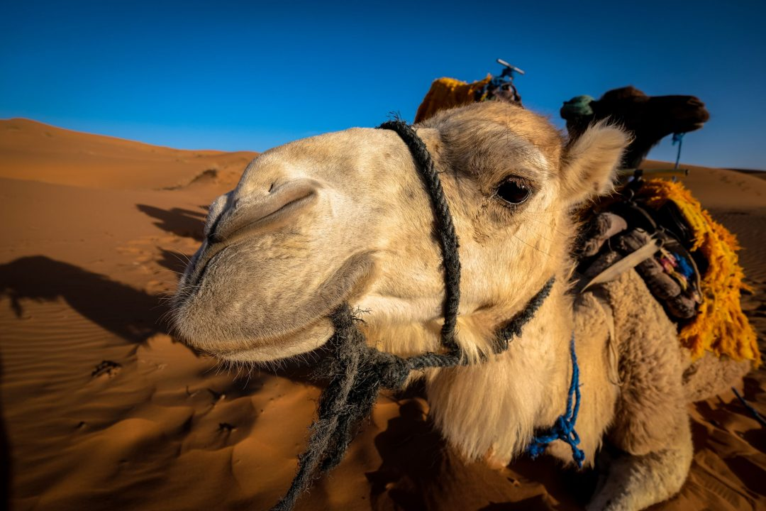 Fes 2 days itinerary: Desert tours from Fes.