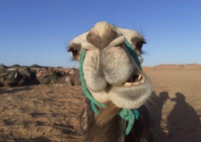 2 days tour from Marrakech to Zagora desert.