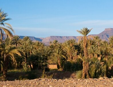 palm groves with the itinerary of the 7 days desert tour from Marrakech