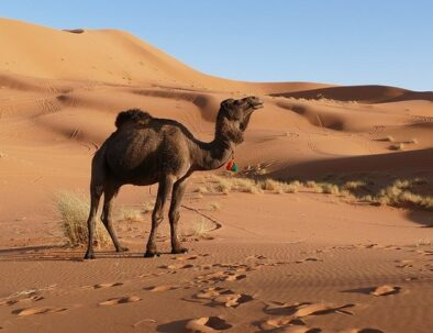 7 days itinerary from Marrakech to the Sahara desert of Merzouga